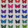 Scott campbell butterfly
