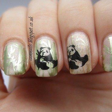 33dc chinese pandas3 thumb370f