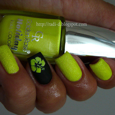 Golden rose holiday 80  7  thumb370f