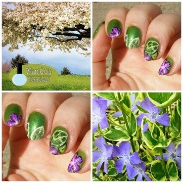 Vinca major Variegata nail art by Szilvia