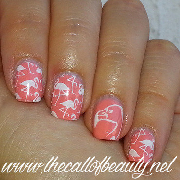 Pink 20flamingo 20 5  20wm 20ig thumb370f