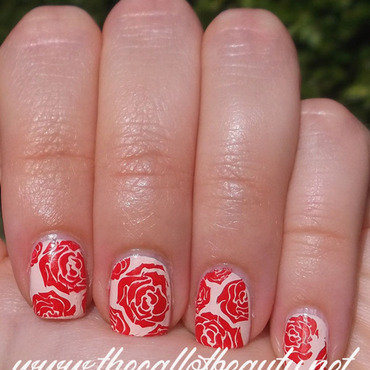 Red 20roses 20 2  20wm thumb370f