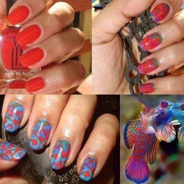 164 mandarinfish nailedit thumb370f