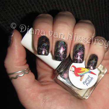 Parrot 20polish 20anne 20cormac 20with 20marianne 20no27 thumb370f